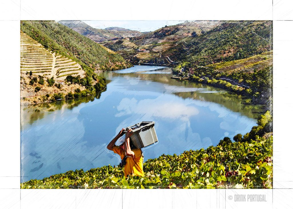 Wine harvest in Douro Valley
