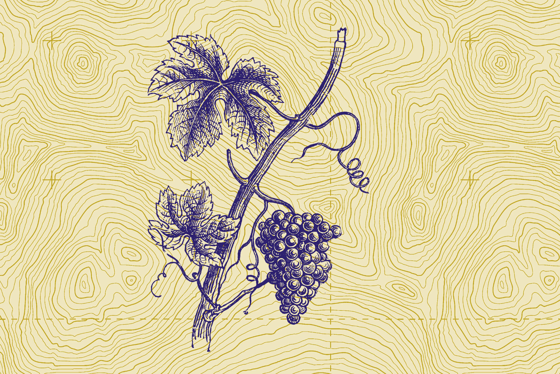 Bunch of grapes illustration